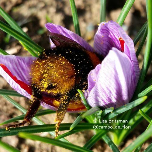 bee orginal cropped copyright text